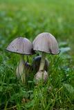 Famiglia del fungo Immagini Stock Libere da Diritti