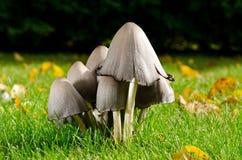 Famiglia del fungo Immagini Stock