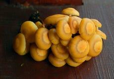 Famiglia del fungo di miele Immagine Stock