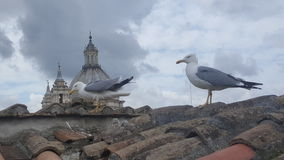 Famiglia del gabbiano sui tetti di Roma Immagini Stock