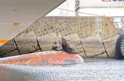 Famiglia del leone marino Fotografie Stock