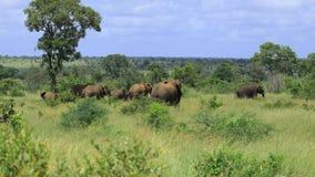 Famiglia dell'elefante Fotografie Stock