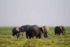 Famiglia dell'elefante africano fotografia stock
