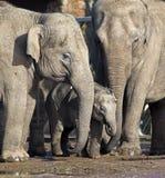 Famiglia dell'elefante con il bambino Fotografie Stock Libere da Diritti