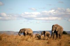 Famiglia dell'elefante nell'erba Fotografia Stock Libera da Diritti