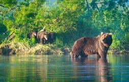 Famiglia dell'orso bruno in lago Kuril fotografia stock libera da diritti
