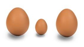 Famiglia dell'uovo Fotografia Stock Libera da Diritti