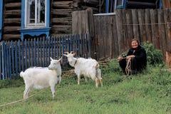 Famiglia della provincia - signora anziana con le capre bianche domestiche Immagine Stock
