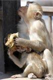 Famiglia della scimmia Fotografie Stock Libere da Diritti