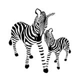 Famiglia della zebra, in bianco e nero a strisce illustrazione di stock