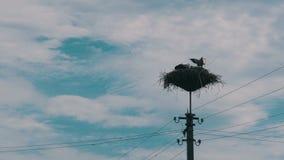 Famiglia delle cicogne nel suo nido su una colonna Lasso di tempo video d archivio