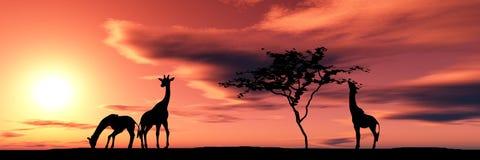 Famiglia delle giraffe Immagini Stock