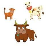 Famiglia delle mucche Immagine Stock