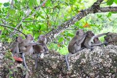 Famiglia delle scimmie selvagge Fotografia Stock Libera da Diritti