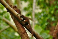 Famiglia dello scoiattolo Immagine Stock