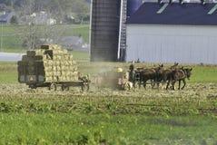 Famiglia di Amish che raccoglie i campi su Autumn Day immagine stock
