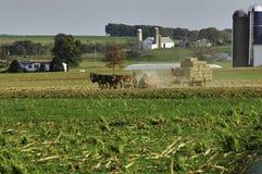 Famiglia di Amish che raccoglie i campi su Autumn Day immagini stock libere da diritti