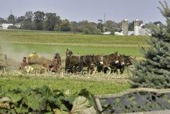 Famiglia di Amish che raccoglie i campi su Autumn Day immagine stock libera da diritti
