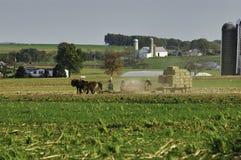 Famiglia di Amish che raccoglie i campi su Autumn Day fotografie stock libere da diritti