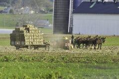 Famiglia di Amish che raccoglie i campi su Autumn Day fotografia stock libera da diritti