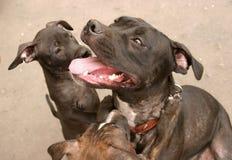 Famiglia di cane felice Immagini Stock