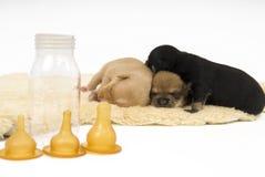 Famiglia di cani. Immagine Stock Libera da Diritti