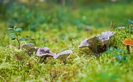 Famiglia di fungo Immagini Stock