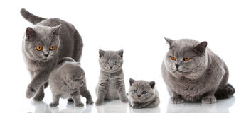 Famiglia di gatto Fotografia Stock