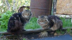 Famiglia di gatto selvaggia Fotografia Stock Libera da Diritti