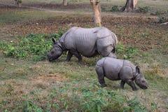 Famiglia di rinoceronte immagini stock libere da diritti