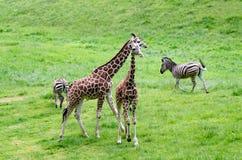 Famiglia di safari Immagine Stock Libera da Diritti