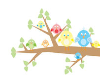 Famiglia di uccello Immagine Stock