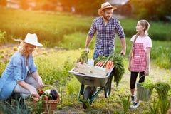Famiglia diligente degli agricoltori Fotografia Stock