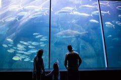Famiglia felice che esamina il carro armato di pesce Immagini Stock