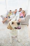 Famiglia felice che si siede sullo strato con il loro giallo labrador dell'animale domestico sulla coperta fotografia stock libera da diritti
