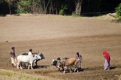 Famiglia indiana dell'agricoltore nel campo Immagini Stock