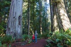 Famiglia nella foresta della sequoia immagini stock libere da diritti