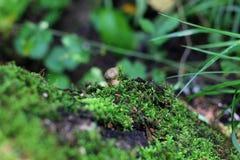 Famiglia piacevole del fungo in foresta fra i moos Fotografia Stock