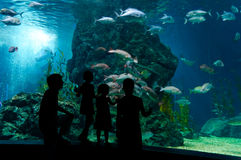Famiglia subacquea Fotografia Stock