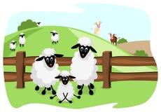 Famiglia sveglia delle pecore sul pascolo Fotografia Stock Libera da Diritti