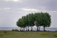 Famiglia verde dell'albero Immagini Stock Libere da Diritti
