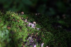 Familia agradable de la seta en bosque entre moos Fotografía de archivo libre de regalías