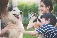 Familia asiática que juega con el perro del husky siberiano Fotos de archivo