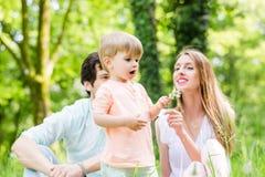 Familia con el hijo en la semilla del diente de león del prado que sopla Imagenes de archivo