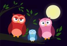 Familia de búhos Colección linda de los búhos de la historieta ilustración del vector