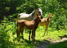 Familia de caballo imagen de archivo libre de regalías