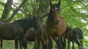 Familia de caballos almacen de video