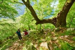 Familia de caminantes que caminan en un rastro de montaña Foto de archivo