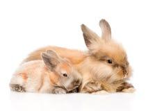 Familia de conejos Aislado en el fondo blanco Imagen de archivo