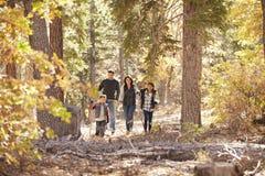 Familia de cuatro miembros hispánica que camina junto en un bosque Fotografía de archivo